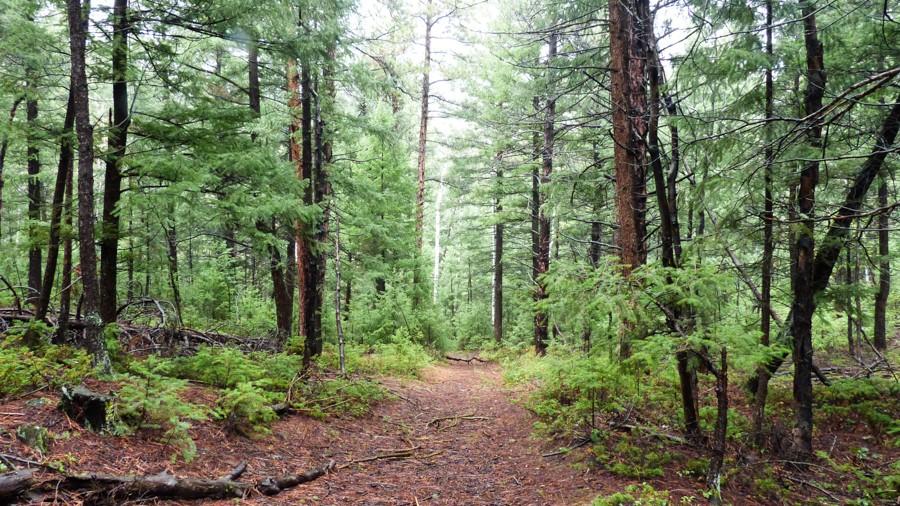 Audrey Habitat – Forest-1380726 | Woodpecker Alley